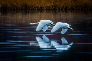 Duo takeoff