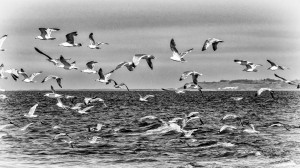 Seagull-escape
