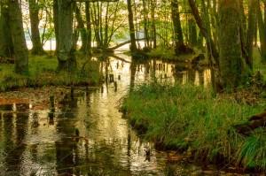 Creek-to-the-lake