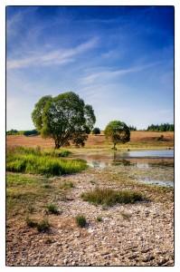 Trees-at-the-lake-bank