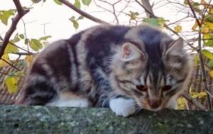 Curious-wild-cat